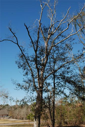 Day-28-dead_tree